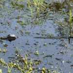 Everglades Nationalpark Florida